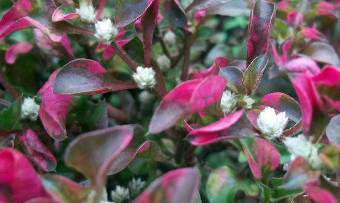 Detectar y solucionar  las enfermedades más comunes de las plantas.