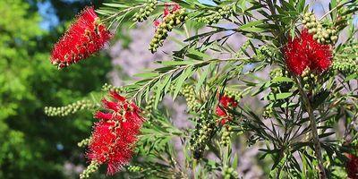 Plantas de exterior resistentes. Mantenimiento de jardín.borjardin (1)