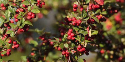 Plantas de exterior resistentes. Mantenimiento de jardín.borjardin.es (2)