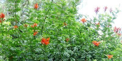 Plantas de exterior resistentes. Mantenimiento de jardín.borjardin.es.