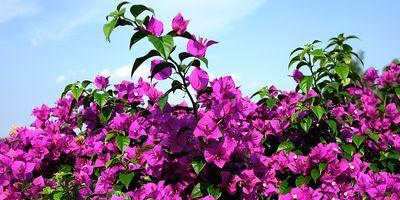 Plantas de exterior resistentes. Mantenimiento de jardín.borjardin.es