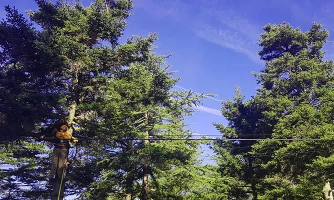 Poda ramas secas