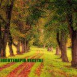 endoterapia