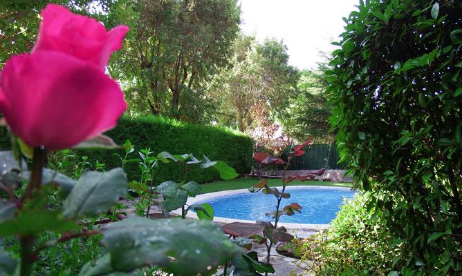 Oferta del mes: Puesta a punto del jardin para el verano