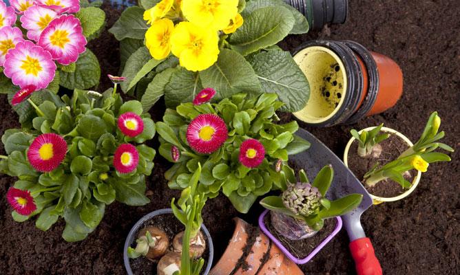 Borjardin: flores-de-primavera