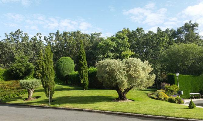 Mantenimiento de jardinería en Tanatorio de San lorenzo del Escorial: Borjardín
