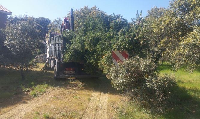 plantacion de abeto 2- BORJARDIN.